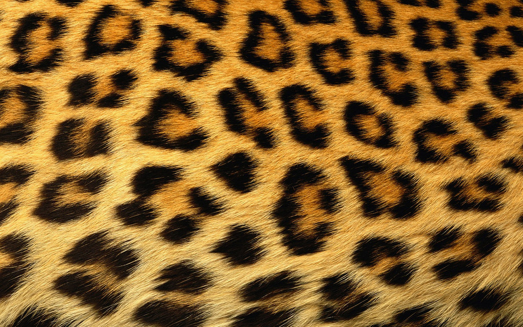 Loved Up with Leopard Print | SCAN